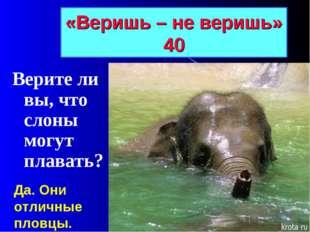 «Веришь – не веришь» 40 Верите ли вы, что слоны могут плавать? Да. Они отличн