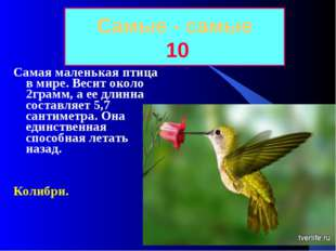 Самые - самые 10 Самая маленькая птица в мире. Весит около 2грамм, а ее длинн