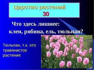 Царство растений 30 Что здесь лишнее: клен, рябина, ель, тюльпан? Тюльпан, т.
