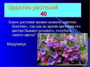 Царство растений 40 Какое растение можно назвать «цветок-букетик», так как во
