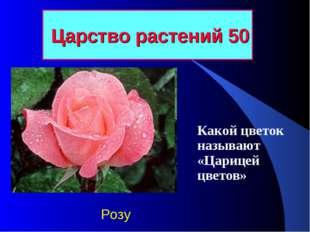 Царство растений 50 Какой цветок называют «Царицей цветов» Розу