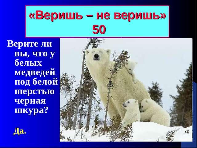 «Веришь – не веришь» 50 Верите ли вы, что у белых медведей под белой шерстью...