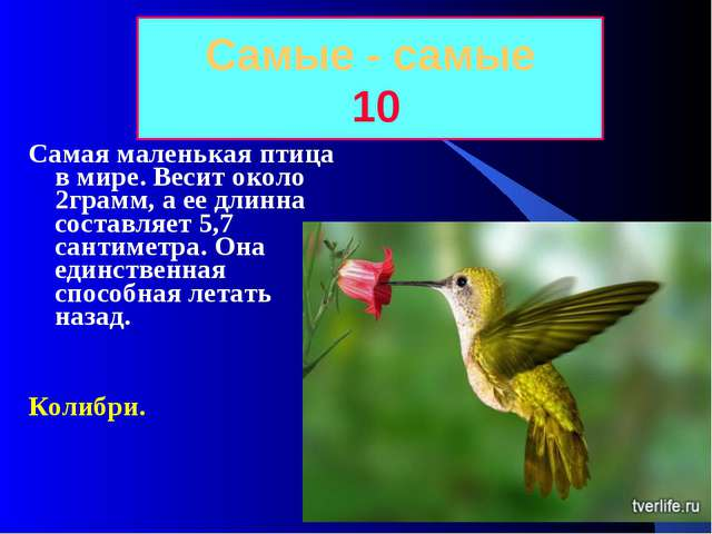 Самые - самые 10 Самая маленькая птица в мире. Весит около 2грамм, а ее длинн...