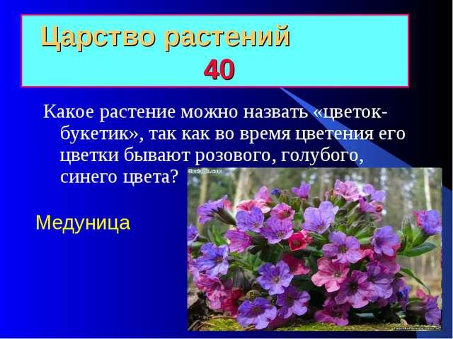 Царство растений 40 Какое растение можно назвать «цветок-букетик», так как во...
