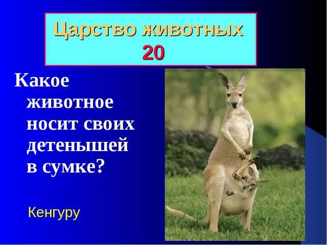 Царство животных 20 Какое животное носит своих детенышей в сумке? Кенгуру