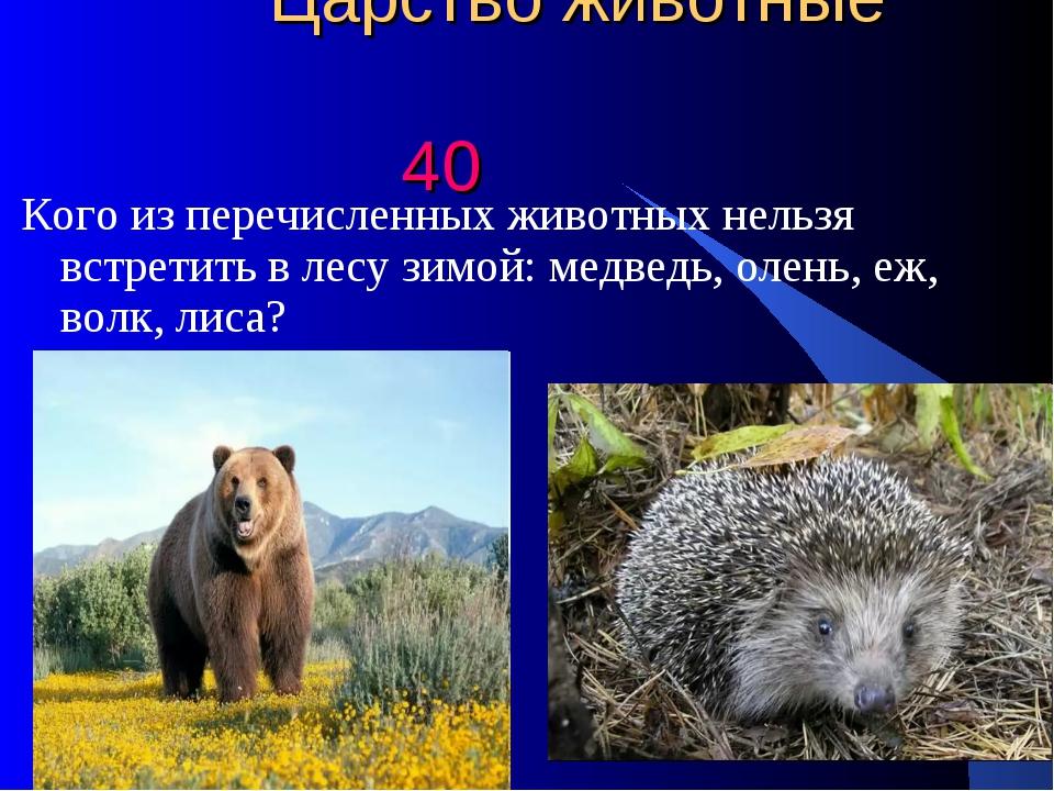 Царство животные 40 Кого из перечисленных животных нельзя встретить в лесу з...