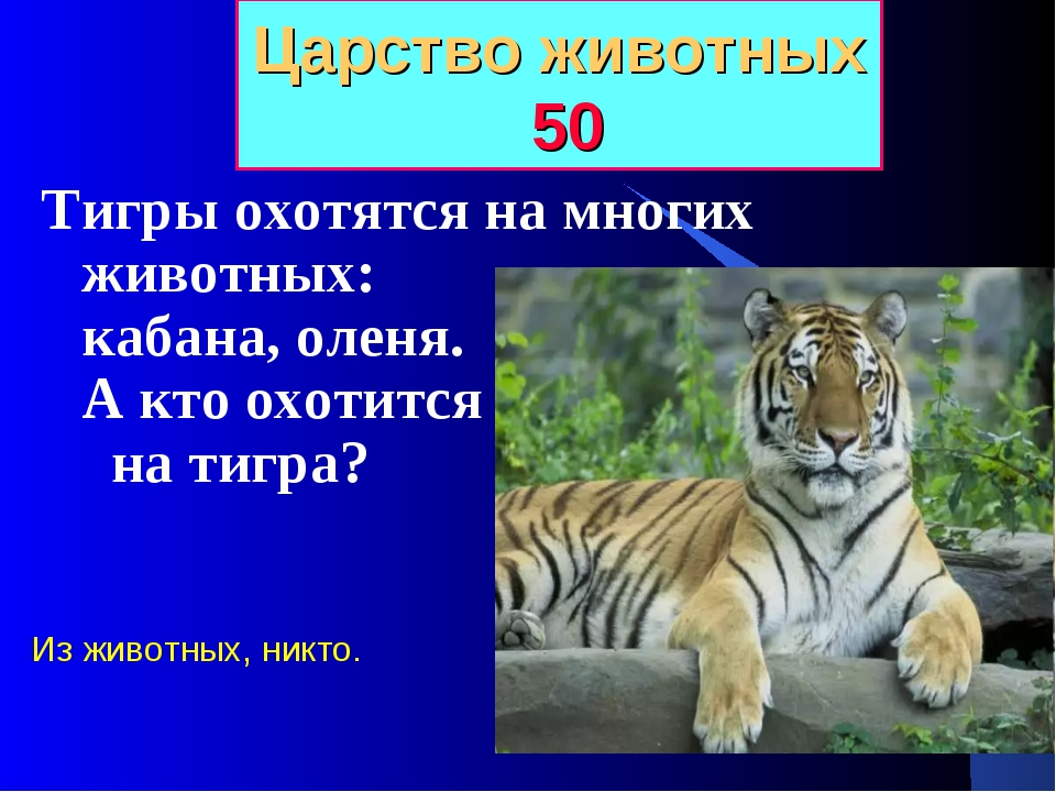 Царство животных 50 Тигры охотятся на многих животных: кабана, оленя. А кто о...