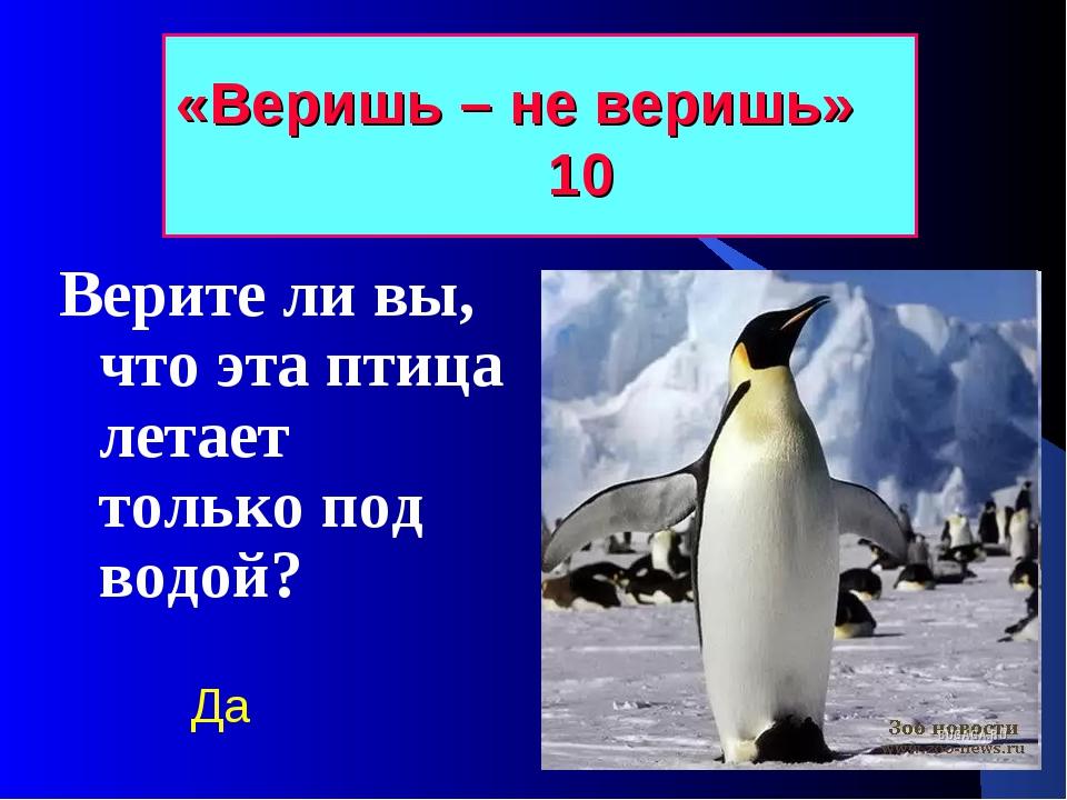 «Веришь – не веришь» 10 Верите ли вы, что эта птица летает только под водой? Да