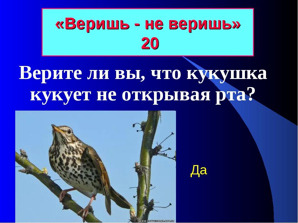 «Веришь - не веришь» 20 Верите ли вы, что кукушка кукует не открывая рта? Да
