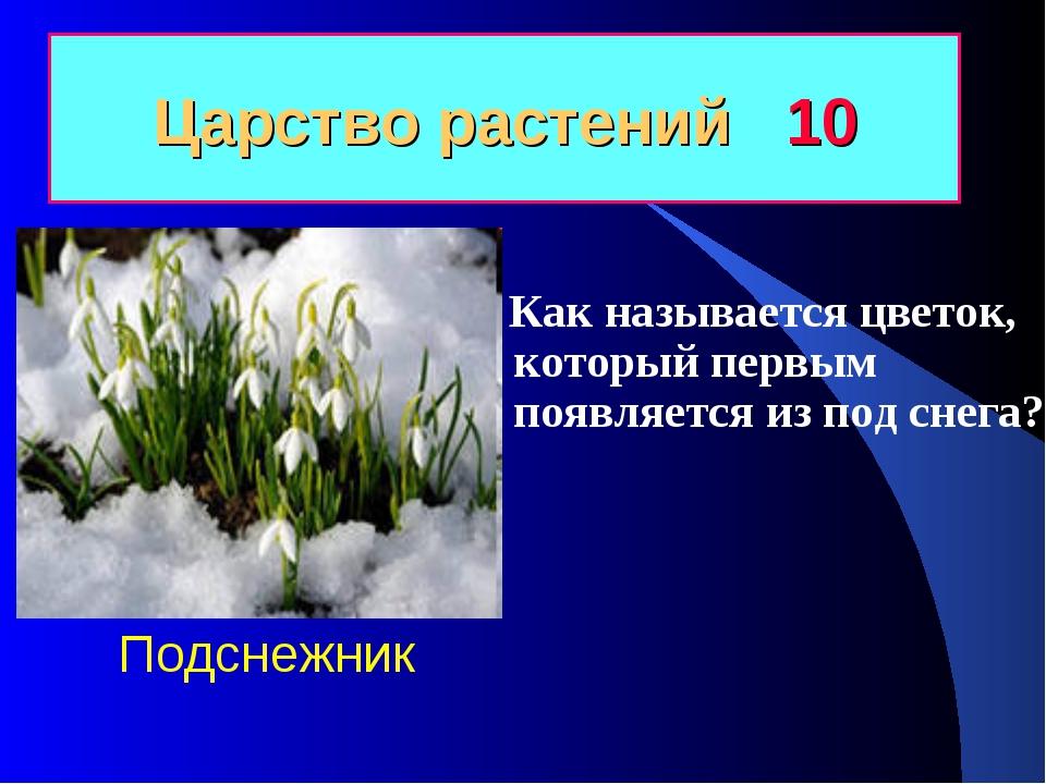 Царство растений 10 Как называется цветок, который первым появляется из под с...