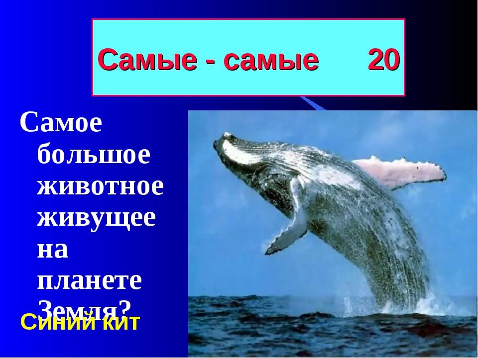 Самые - самые 20 Самое большое животное живущее на планете Земля? Синий кит