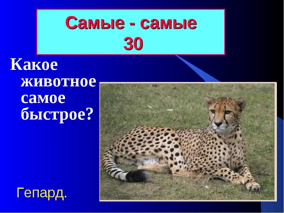 Самые - самые 30 Какое животное самое быстрое? Гепард.