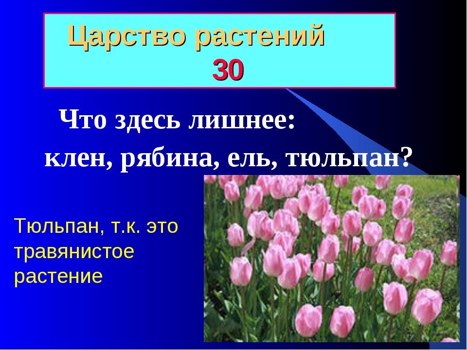 Царство растений 30 Что здесь лишнее: клен, рябина, ель, тюльпан? Тюльпан, т....
