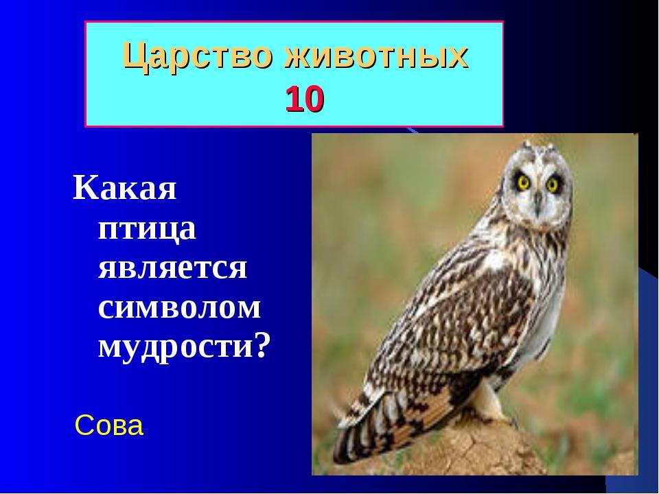 Царство животных 10 Какая птица является символом мудрости? Сова