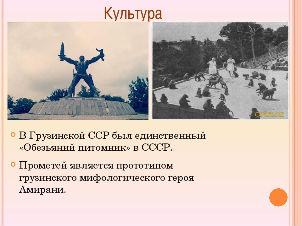 Культура В Грузинской ССР был единственный «Обезьяний питомник» в СССР. Про...