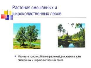 Растения смешанных и широколиственных лесов Назовите приспособления растений