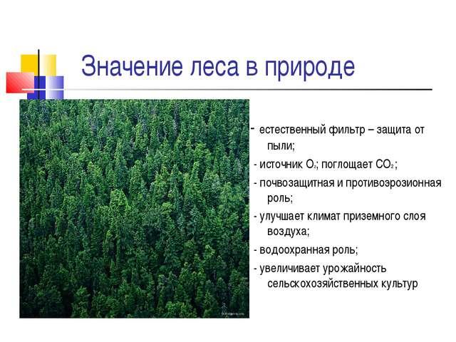 Значение леса в природе - естественный фильтр – защита от пыли; - источник О...