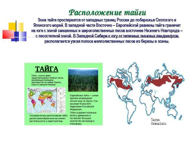 Расположение тайги Зона тайги простирается от западных границ России до побер...