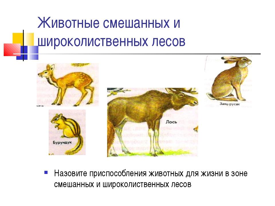 Животные смешанных и широколиственных лесов Назовите приспособления животных...