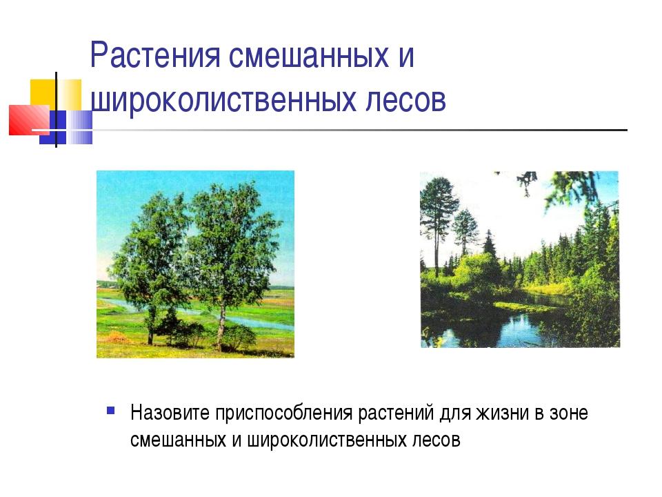 Растения смешанных и широколиственных лесов Назовите приспособления растений...