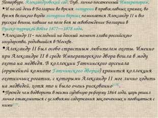 Петербург. Александровский сад. Дуб, лично посаженный Императором. И по сей д
