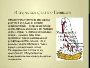 Интересные факты о Пеликане Пеликан почитается почти во всех мировых религиях