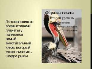 По сравнению со всеми птицами планеты у пеликанов самый вместительный клюв, к