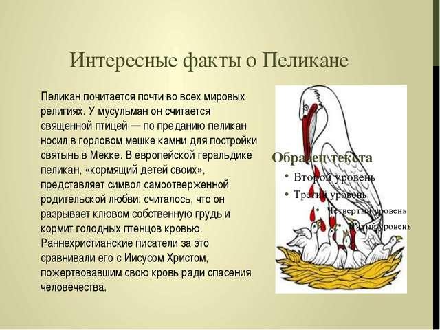 Интересные факты о Пеликане Пеликан почитается почти во всех мировых религиях...
