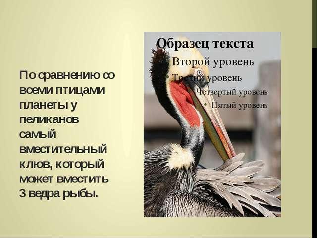 По сравнению со всеми птицами планеты у пеликанов самый вместительный клюв, к...