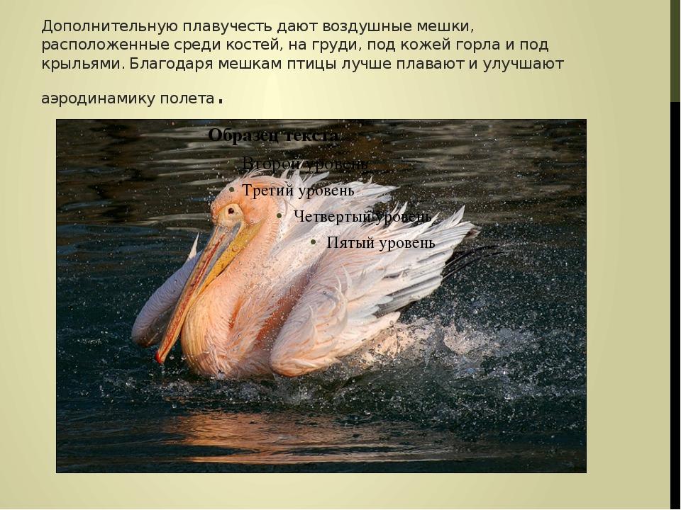 Дополнительную плавучесть дают воздушные мешки, расположенные среди костей, н...