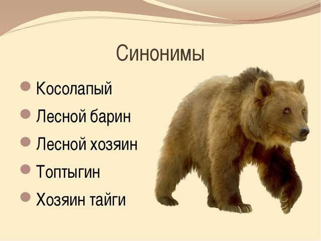 Синонимы Косолапый Лесной барин Лесной хозяин Топтыгин Хозяин тайги