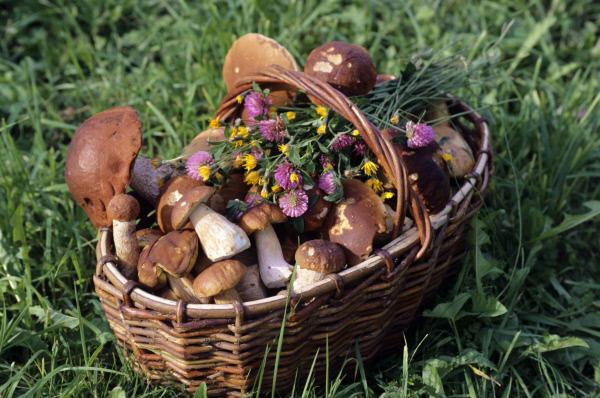 http://mushroomer.info/wp-content/uploads/2011/09/mush.jpg