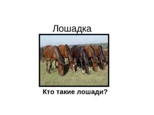 Лошадка Кто такие лошади?