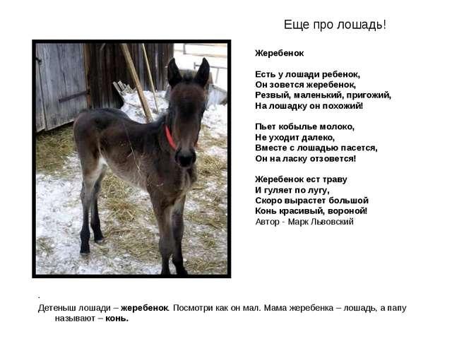 Еще про лошадь! . Детеныш лошади – жеребенок. Посмотри как он мал. Мама жереб...