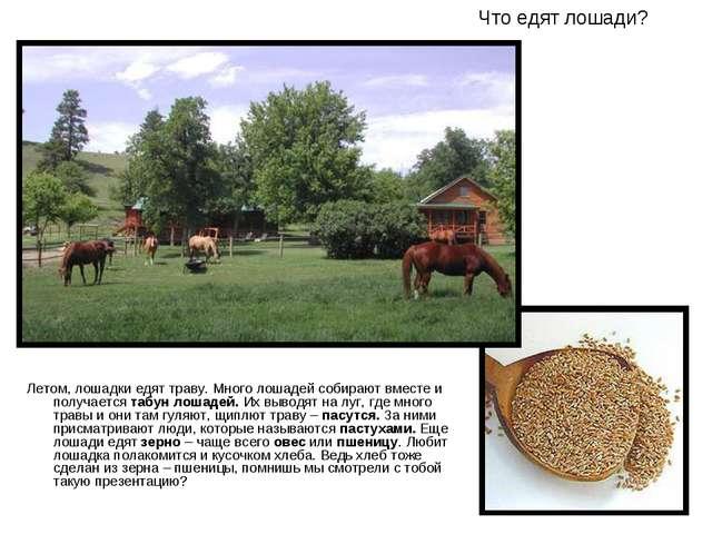 Что едят лошади? Летом, лошадки едят траву. Много лошадей собирают вместе и п...