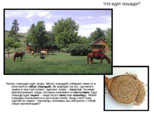 Что едят лошади? Летом, лошадки едят траву. Много лошадей собирают вместе и п