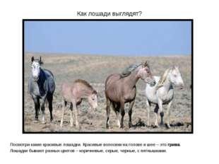 Как лошади выглядят? Посмотри какие красивые лошадки. Красивые волосики на го