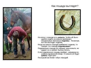 Как лошади выглядят? На ногах у лошади есть копыта. Чтобы ей было удобно ходи