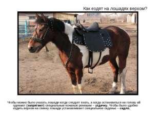 Как ездят на лошадях верхом? Чтобы можно было указать лошади когда следует ех