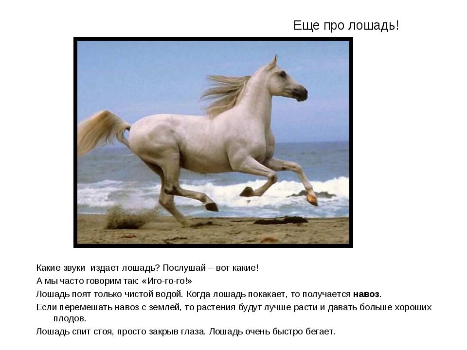 Еще про лошадь! Какие звуки издает лошадь? Послушай – вот какие! А мы часто г...