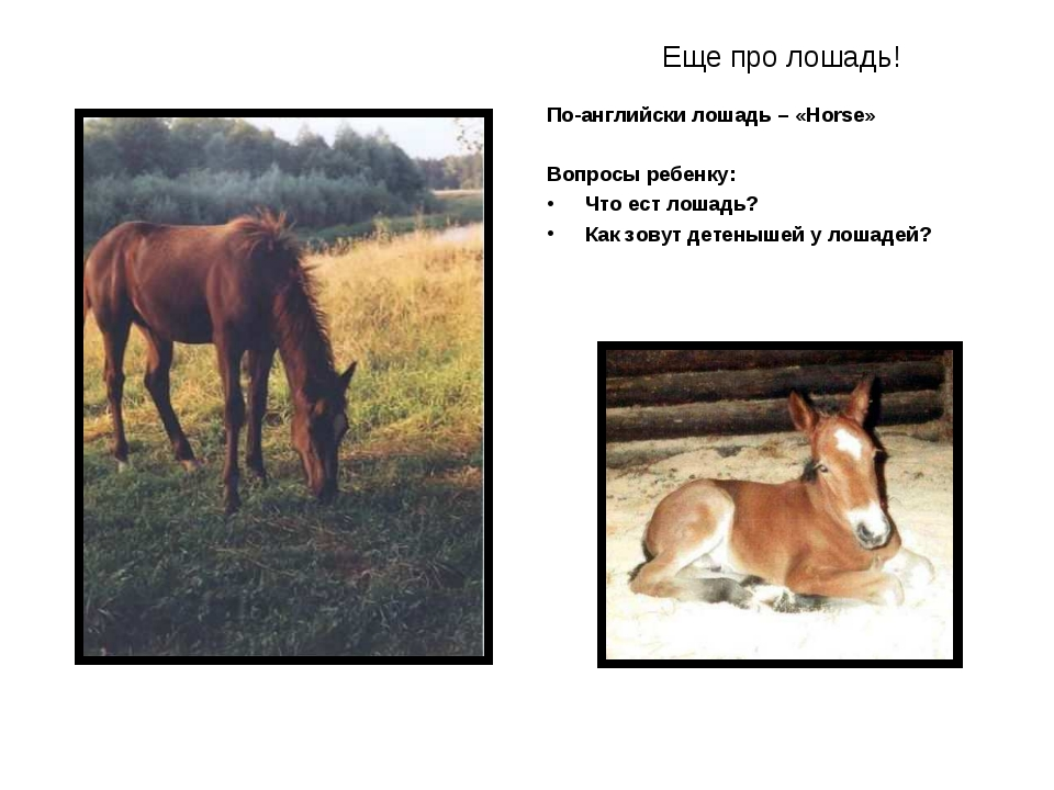 Еще про лошадь! По-английски лошадь – «Horse» Вопросы ребенку: Что ест лошадь...