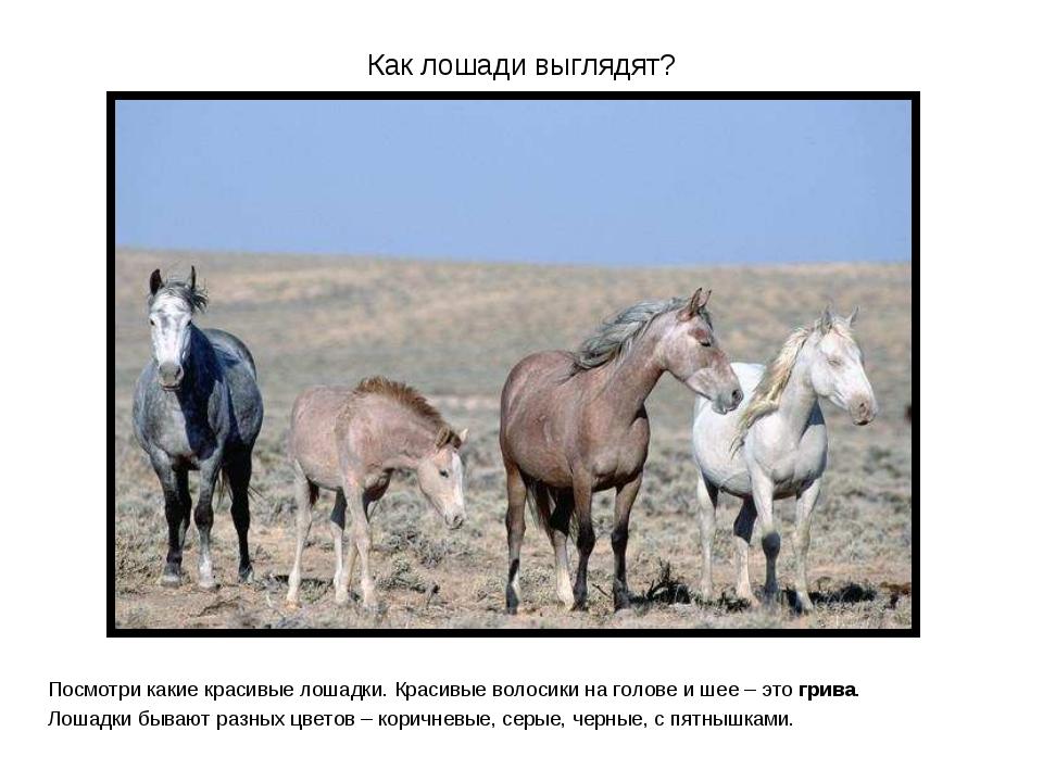Как лошади выглядят? Посмотри какие красивые лошадки. Красивые волосики на го...