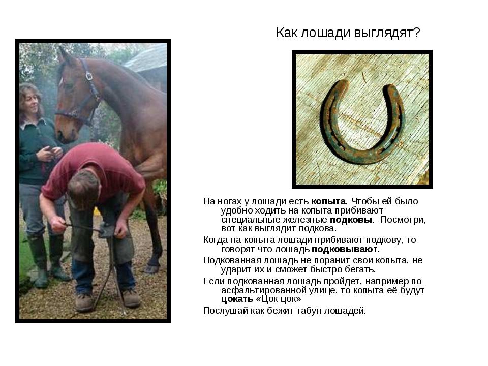 Как лошади выглядят? На ногах у лошади есть копыта. Чтобы ей было удобно ходи...