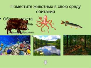 Поместите животных в свою среду обитания