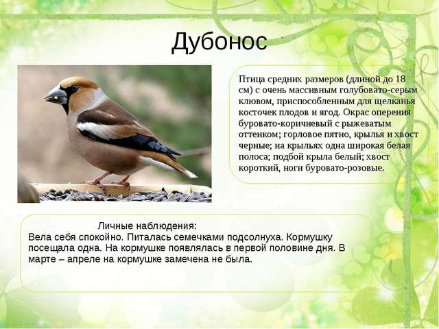 Дубонос Птица средних размеров (длиной до 18 см) с очень массивным голубовато...