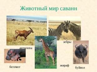 Животный мир саванн антилопа зебры жираф буйвол бегемот