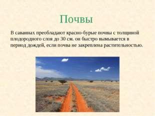 Почвы В саваннах преобладают красно-бурые почвы с толщиной плодородного слоя