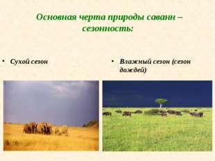 Основная черта природы саванн – сезонность: Сухой сезон Влажный сезон (сезон