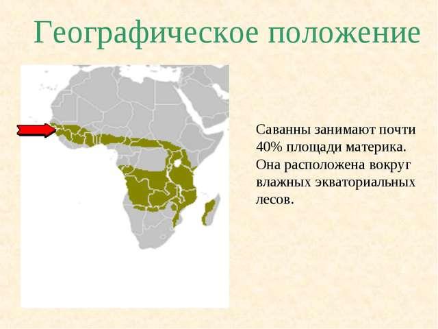 Географическое положение Саванны занимают почти 40% площади материка. Она рас...
