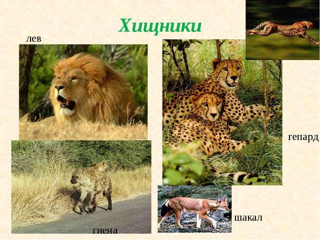Хищники лев гепард шакал гиена